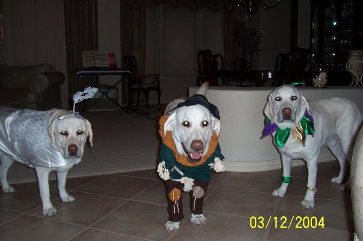 halloween-puppies-001